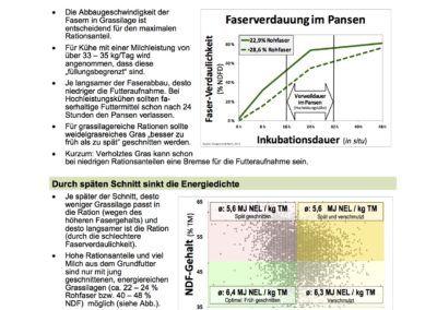 Gras_mittelfrueher_spaeter_1_Schnitt